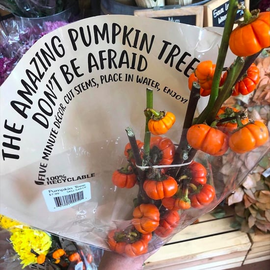 Trader Joe's Is Selling Pumpkin Trees For Just $8