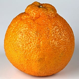 What Are Sumo Oranges?