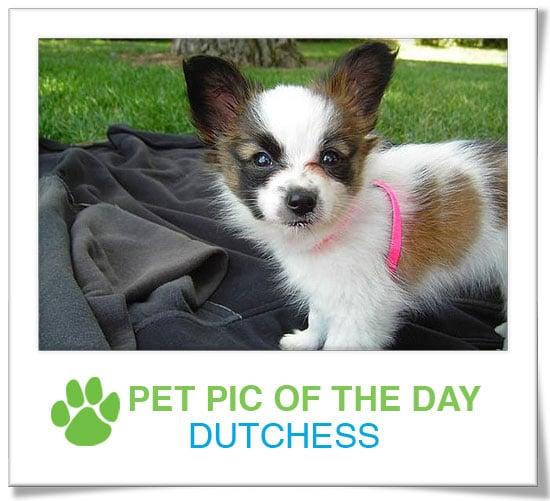 Pet Pics on PetSugar 2008-11-18 09:30:02
