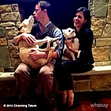 Channing Tatum and Jenna Dewan posted this cute snap with their dogs.