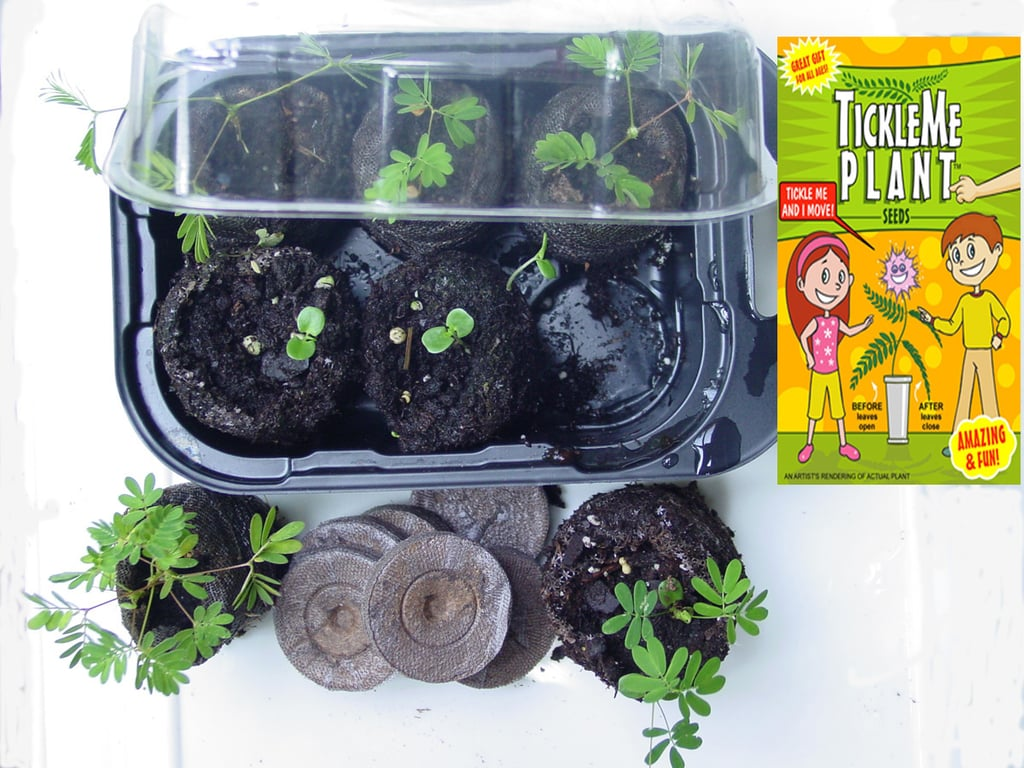 For the Future Green Thumb