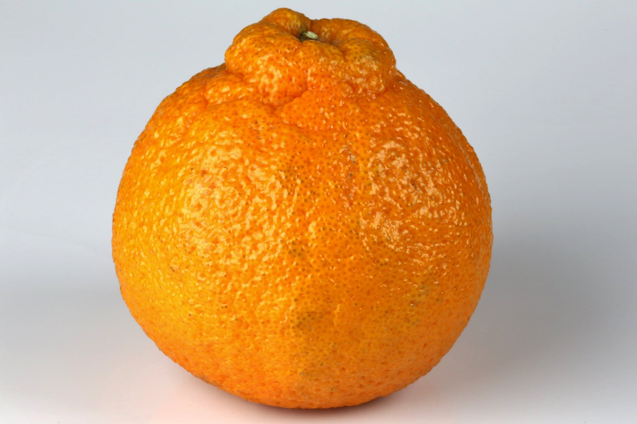 Or sometimes known as a Sumo Mandarin Orange