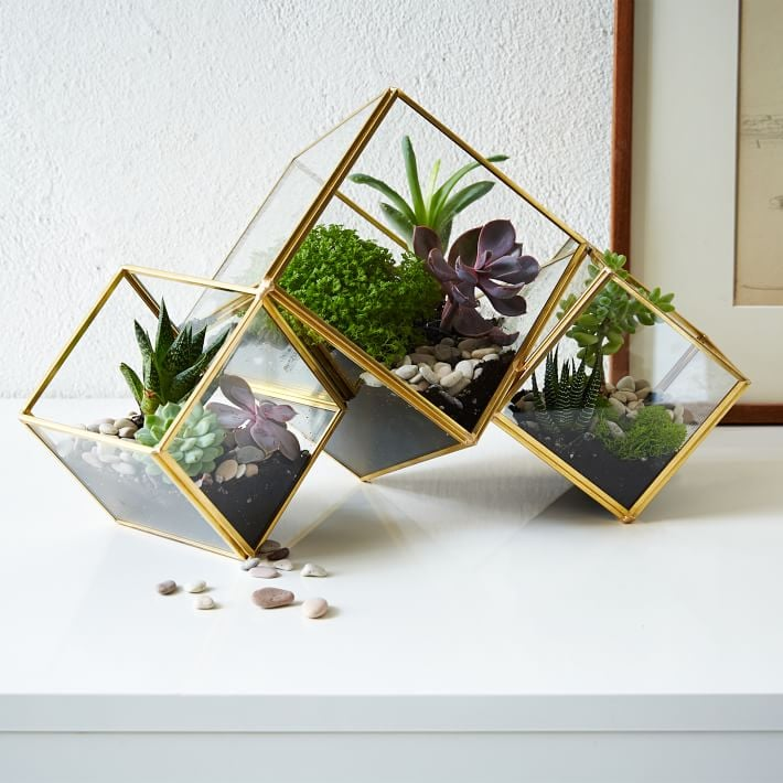 For the Plant-Lover: Succulent Arrangement Terrarium
