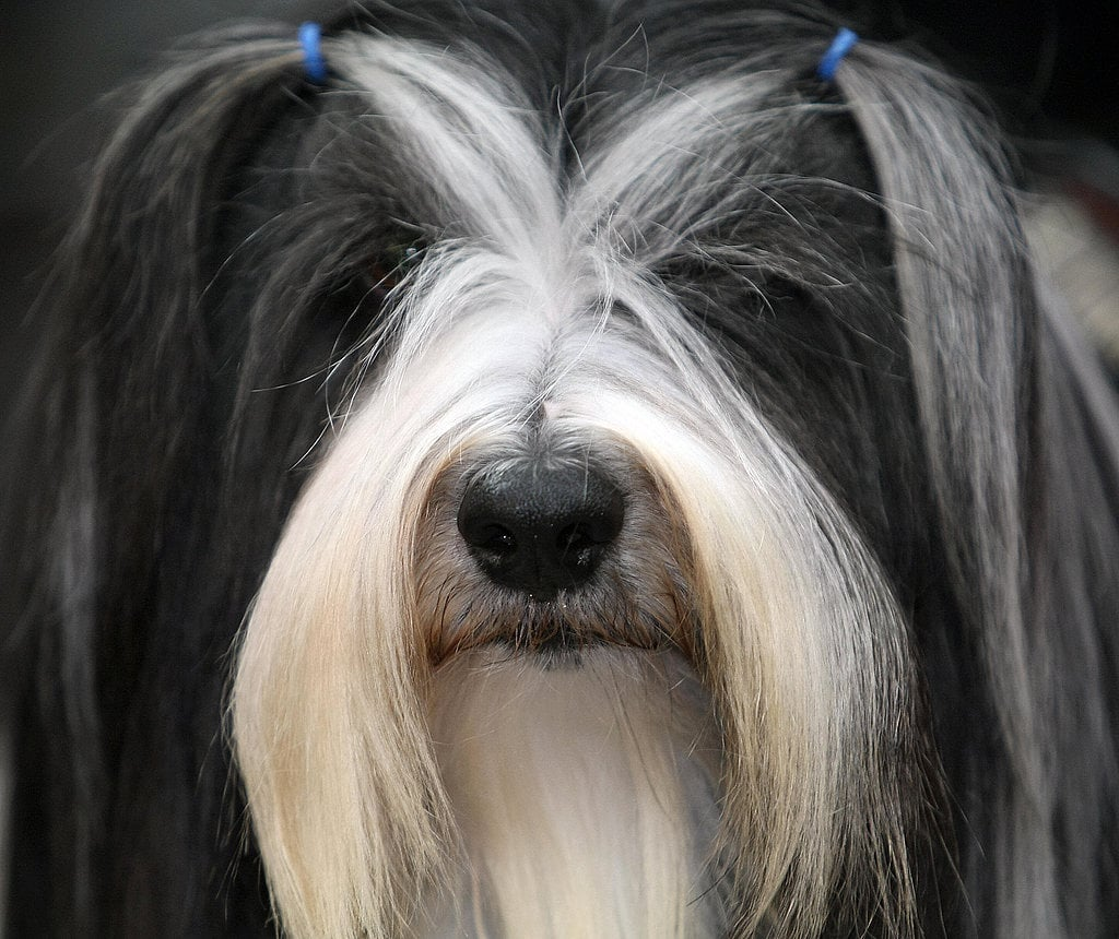Pictures Of Dog Hairstyles Popsugar Pets