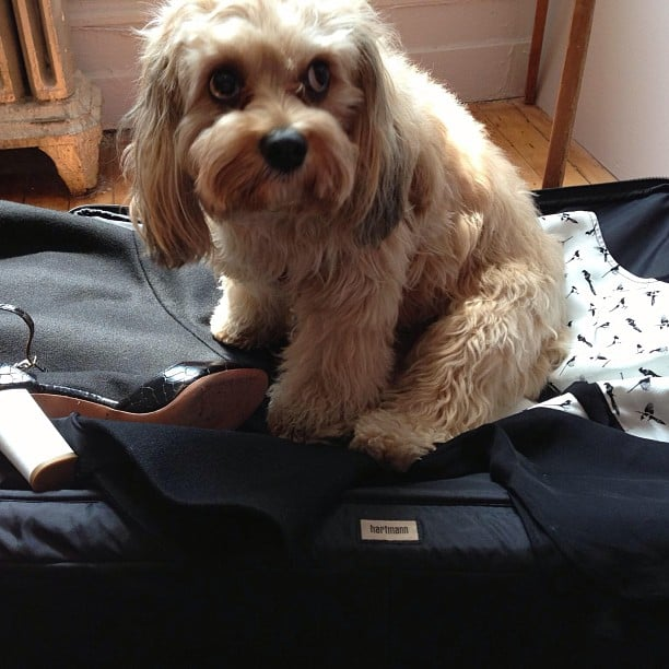 When it came time to pack for a trip, Misha Nonoo's dog didn't want to say goodbye! Source: Instagram user nonoo_ny