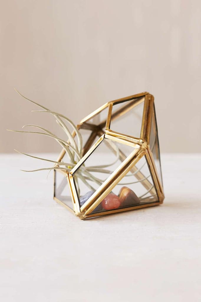 Glass Terrarium ($18)