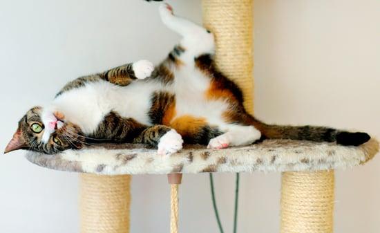 Kitty Quirks: 15 Reasons Why We Love and Laugh at Our Cats