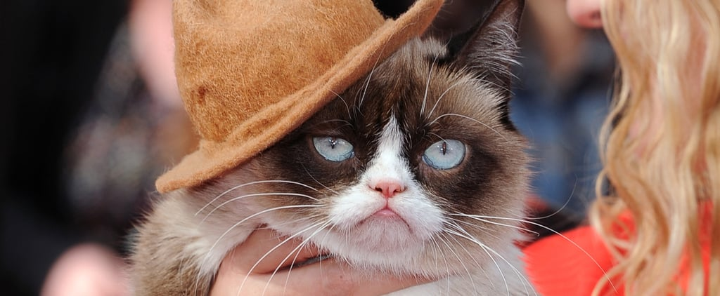 Grumpy Cat in Pharrell's Hat at the MTV Movie Awards 2014