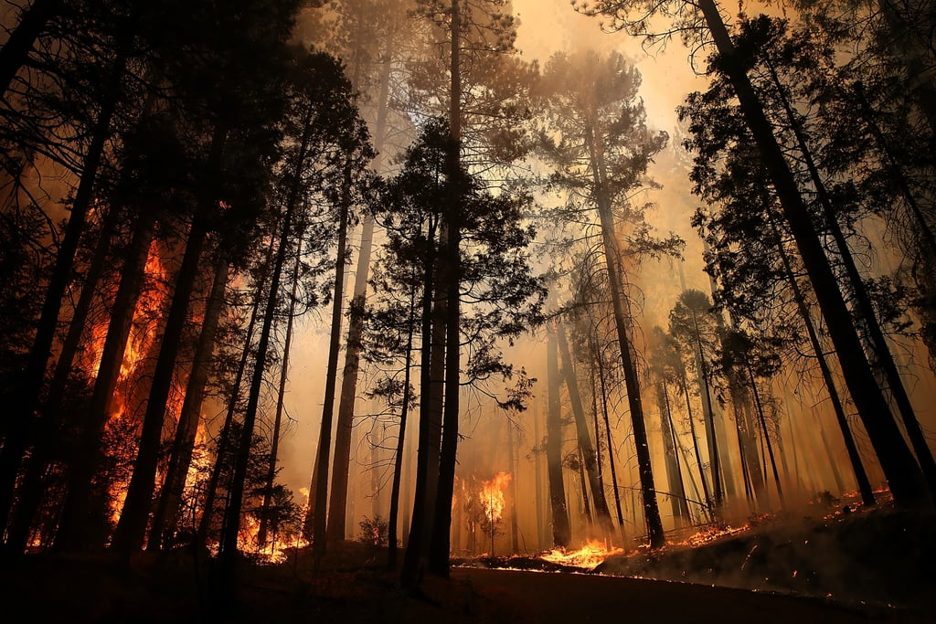 Smoke filled the sky as flames continued to burn the trees.