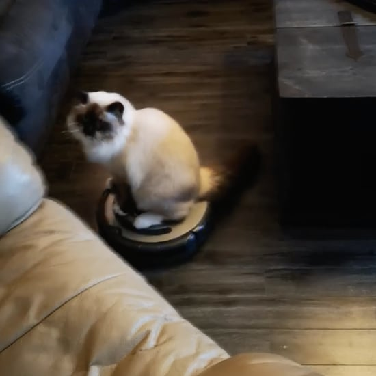 Cat Riding on Roomba Vacuum | Video