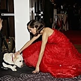 Allison Williams crouched down to pet a pup.