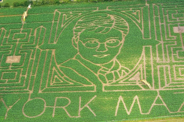 Get Lost in the Harry Potter Corn Maze