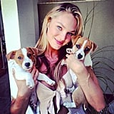 Candice Swanepoel posed with her sweet puppies. Source: Instagram user angelcandices