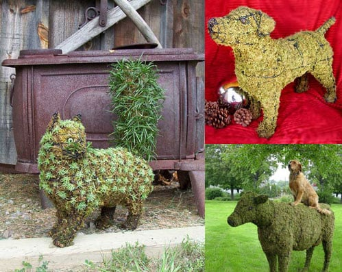 Miracle Grow a Pet in Your Garden?