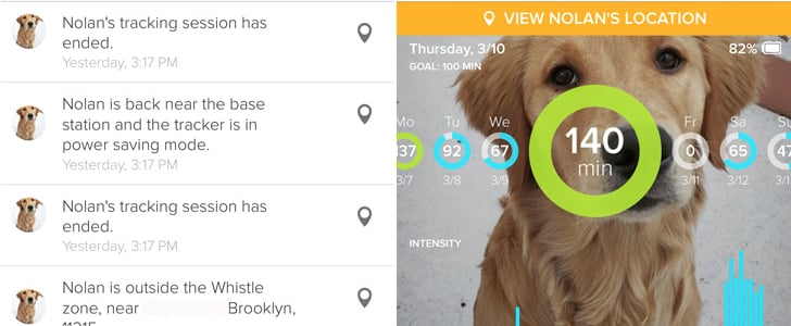 Fitness Trackers For Dogs