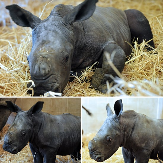 Baby Rhino Pictures