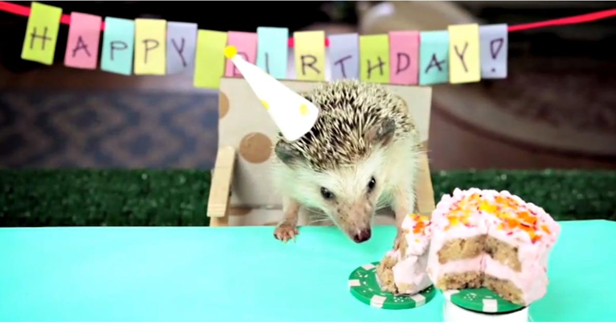 Hedgehog Eating Tiny Cake Video POPSUGAR Food - Hamster birthday cake