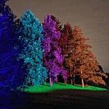 Illuminations at Morton Arboretum in Lisle, Illinois