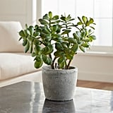 Bonnie: Potted Artificial Jade Plant