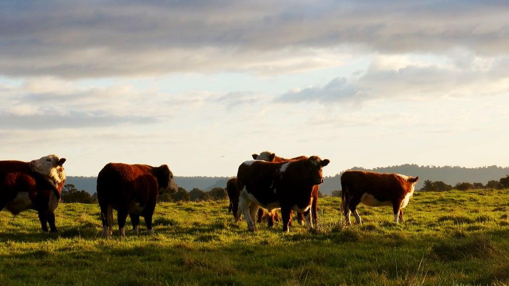 Eat Less Factory-Farmed Meat