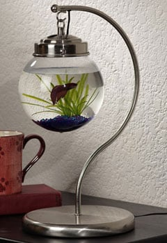 Hanging Aquarium from Opulent Items