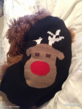 Kristin Cavallari's dog wore a holiday sweater. Source: Twitter User KristinCav
