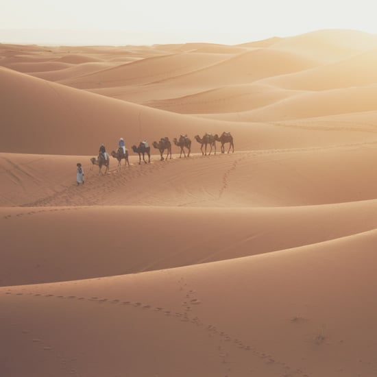 Fastest Camel in The Gulf Competition
