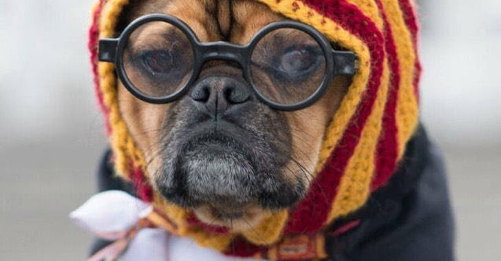 Harry Potter Costumes For Dogs And Cats Popsugar Family