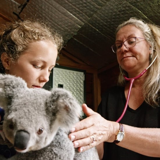 Why Kids Should Watch Izzy Bee's Koala World on Netflix