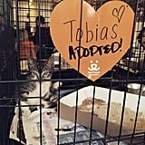 Best Friends LA Animal Society helped over 70 cats find forever homes at CatCon.