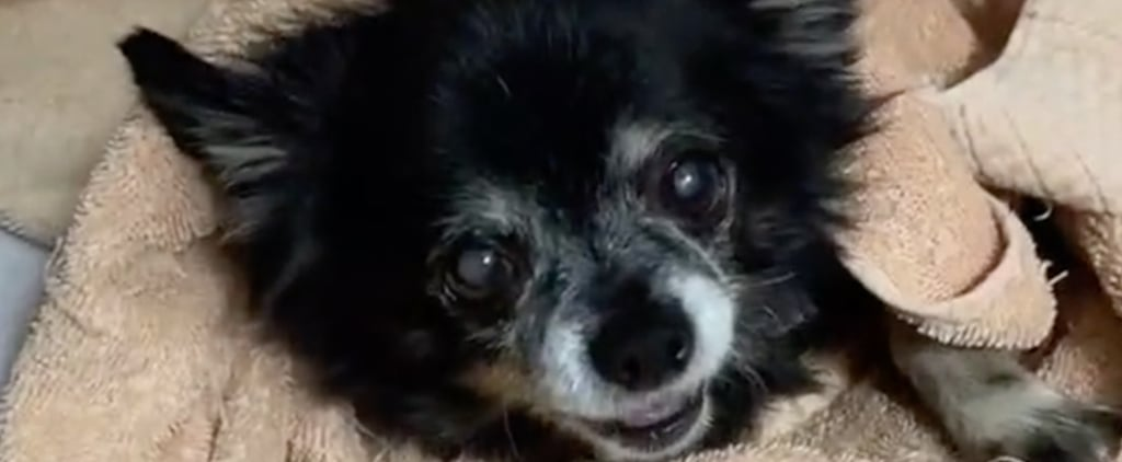 This Dog on TikTok Makes Very Weird Noises | Videos