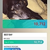 The StarWalk Pet Collar is an excellent value as far as non-GPS fitness trackers go. It sets a goal of 8,000 steps for your dog so you have a baseline of how much activity to aim for, but you can change that to suit your dog. The app tracks your dog's activity as well as calories burned and temperature, which is handy. The adorable little device attaches to your dog's collar easily, but we found that it moved around quite a bit and had a tendency to come off the collar. While the app was easy to use, you had to be in close proximity of the dog to be able to connect with the device, and we wish it somehow had alerts you could activate to remind you to walk your dog. And while the lights on the device are intended as activity monitors, they sometimes went off at what appeared to be random times, including during the night.