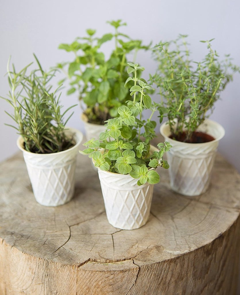 Amazon Now Delivers Live Plants Right to Your Door — Shop These 10 Picks Under $27