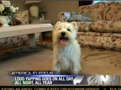Tiny Dog Has Been Barking Nonstop for 6 Years
