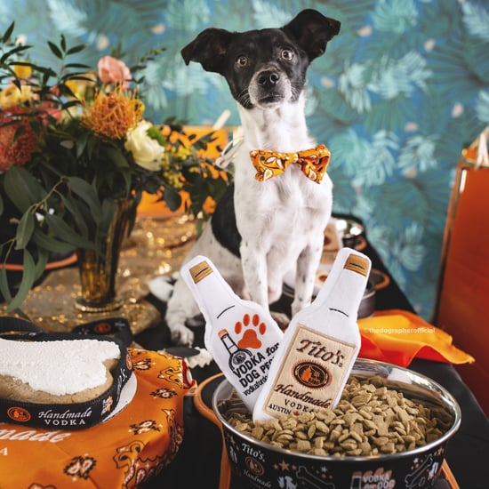 Photos of Dogs at a Fancy Dinner Party to Promote Adoption