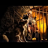 The dog on Pirates of the Caribbean is modeled after Walt Disney's own dog.