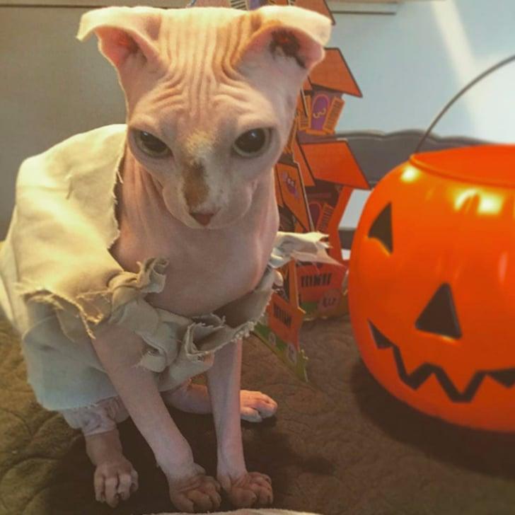 Cat Dressed As Dobby Popsugar Pets