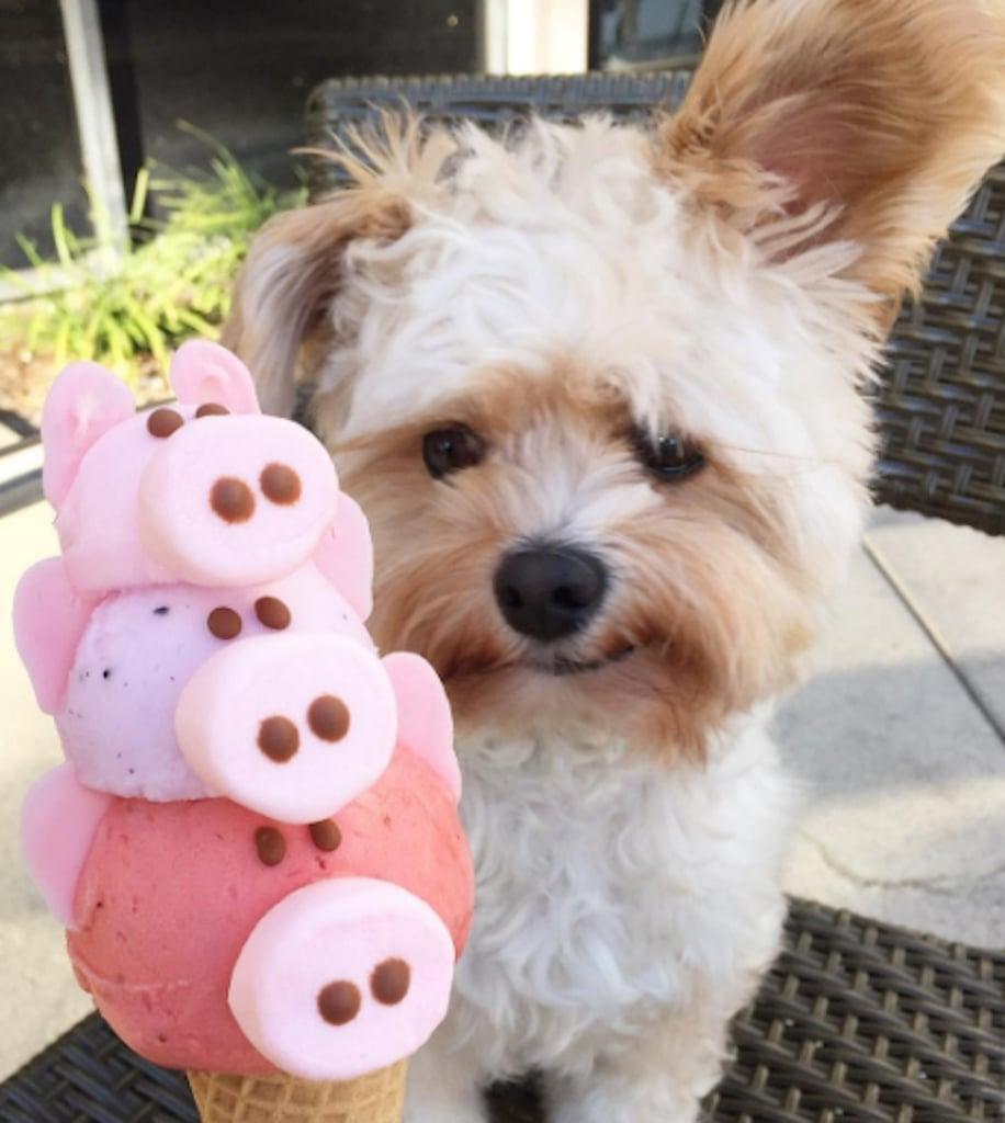 Popeye The Foodie Instagram Star Popsugar Pets