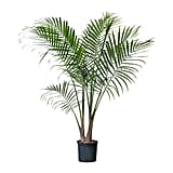 Majesty Palm Potted Plant ($15)