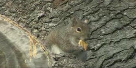 Squirrel Eating Ritz Crackers