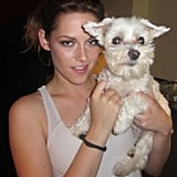 Kristen Stewart and Lucky both have captivating eyes.