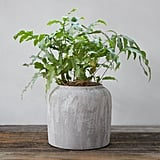 Sanded Terracotta Jar