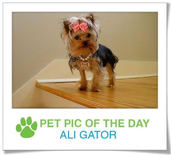 Pet Pics on PetSugar 2009-03-27 09:30:56