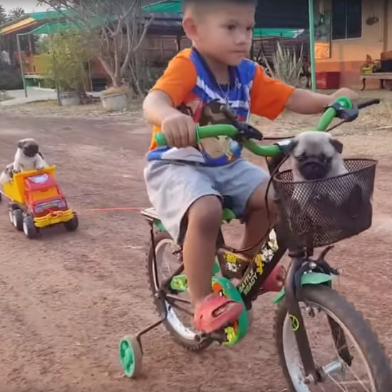 Boy Drives Puppies Around on His Bike