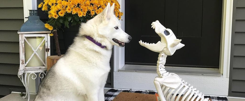 Target's Decorative Pet Skeletons Are Actually Pretty Cute