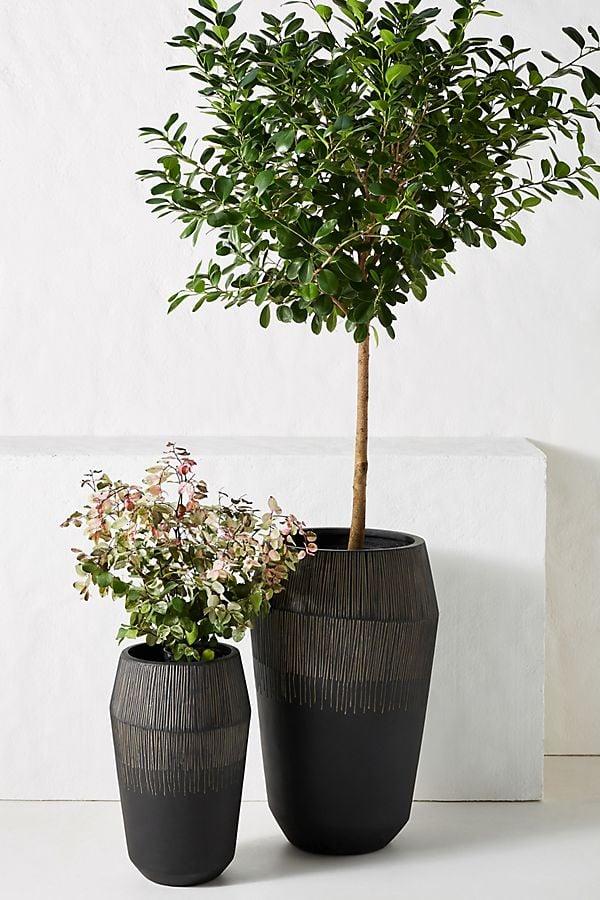 Jeva Planters