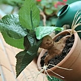 Make Your Own Mandrakes