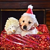 Puppy's Favorite Present