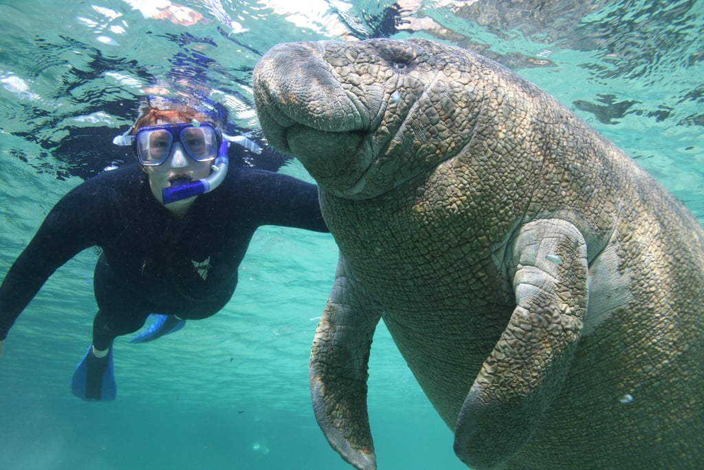Places Where You Can Swim With Animals Popsugar Smart Living