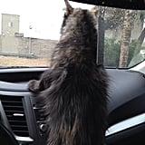 When you are trapped in a fur coat, in this heat, then you can judge me. Source: Instagram user kittykatdeee